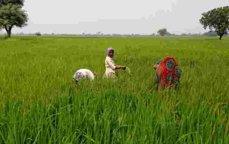 印度大米出口价格上涨较高的当地利率