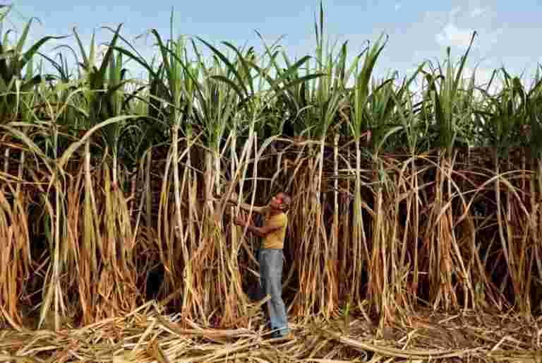 ISMA首席说,印度需要糖类改革作为股票攀登